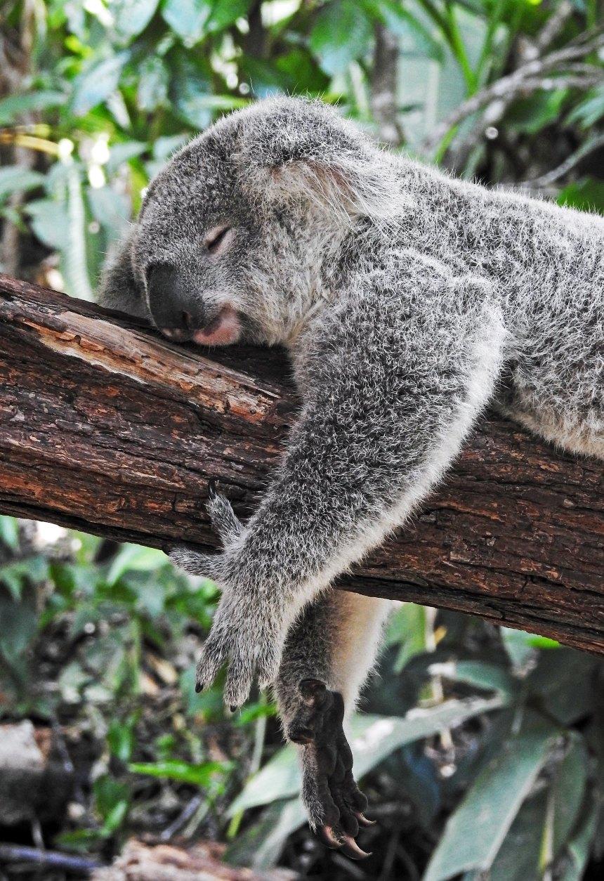 amaeeminhablog-privação-do-sono